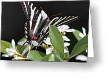 Black And White Swallowtail Square Greeting Card