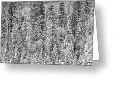 Black And White Trees In A Forest Greeting Card