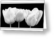 Black And White Tulip Triptych Greeting Card