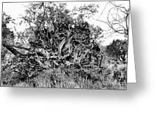 Black And White Uprooted Tree Greeting Card