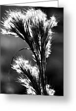 Black And White Vegetation In The Dunes Greeting Card