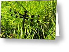 Black And White Winged Dragonfly Greeting Card