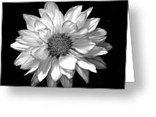 Black And White Zennia Greeting Card