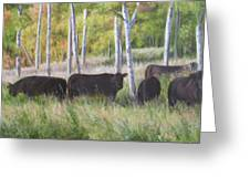 Black Angus Grazing Greeting Card