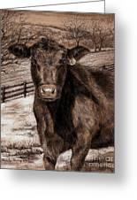 Black Angus In The Field Greeting Card