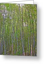 Black Bamboo Heights Greeting Card