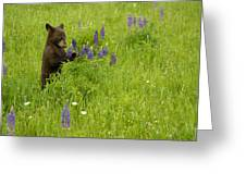 Black Bear   Ursus Americanus Greeting Card