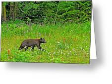 Black Bear Along Yellowhead Highway-bc Greeting Card