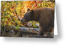 Black Bear Autumn Greeting Card