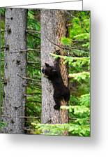 Black Bear Cub Climbing A Pine Tree Greeting Card