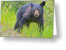 Black Bear Cub Near Road In Grand Teton National Park-wyoming Greeting Card