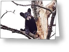 Black Bear Cub Up In A Dead Tree In Northern Minnesota Greeting Card