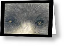 Black Bear Eyes Wildlife Animal Art Greeting Card
