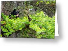 Black Bear Family In A Tree Greeting Card
