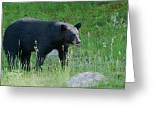 Black Bear Female Greeting Card