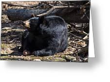 Black Bear Guarding Food Greeting Card