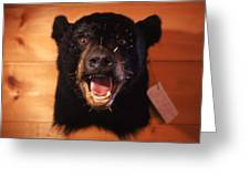 Black Bear Head Greeting Card