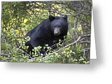 Black Bear II Greeting Card