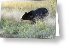 Black Bear In Autumn Greeting Card