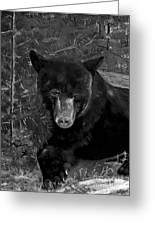 Black Bear - Scruffy - Black And White Cropped Portrait Greeting Card