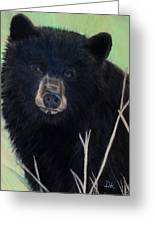 Black Bear Staredown Greeting Card