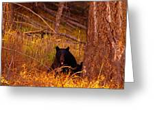 Black Bear Sticking Out Her Tongue  Greeting Card