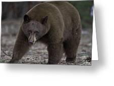 Black Bear Greeting Card by Tom Wilbert