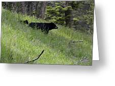 Black Bear With Cub Symetrical On Hillside Greeting Card