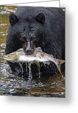 Black Bear With Salmon Greeting Card