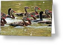 Black-bellied Whistling Ducks Greeting Card