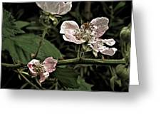 Black Berry Blossoms Greeting Card by Elery Oxford