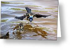 Black Bird On The Water Greeting Card