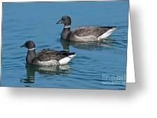 Black Brant Pair Swimming Greeting Card