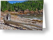 Black Brook In Cape Breton Highlands Np-ns Greeting Card