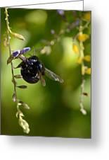 Black Bumblebee Greeting Card