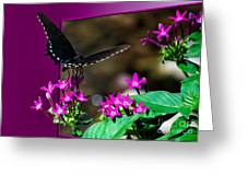 Black Butterfly 06 Greeting Card
