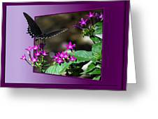 Black Butterfly 07 Greeting Card