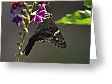 Black Butterfly Greeting Card by Elery Oxford