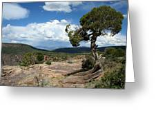 Black Canyon Juniper Greeting Card