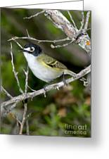 Black-capped Vireo Greeting Card