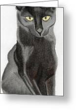 Black Cat Greeting Card by Bav Patel