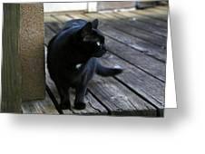 Black Cat On Porch Greeting Card