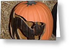 Black Cat On Pumpkin Greeting Card