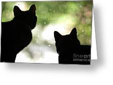 Black Cat Silhouettes Greeting Card