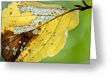 Black Cherry Leaf Greeting Card