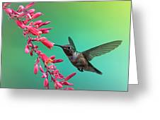 Black Chinned Hummingbird Greeting Card