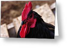 Black Cochin Rooster Greeting Card