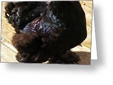 Black Cochin Greeting Card