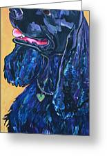 Black Cocker Spaniel Greeting Card by Patti Schermerhorn