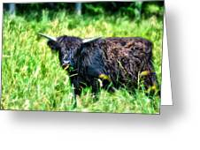 Black Cow Greeting Card